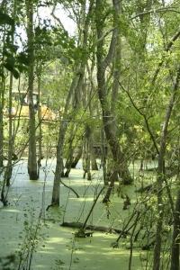 Bulldozer through swamp Vertical